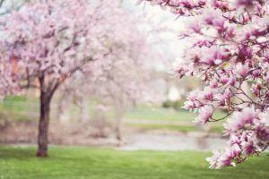 ventajas de estudiar al aire libre