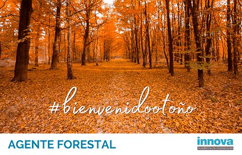 Este otoño, empieza a prepararte para Agente Forestal