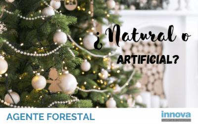 El árbol de Navidad Perfecto según nuestro maestro de agentes forestales